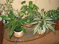 Бизнес по продаже комнатных растений